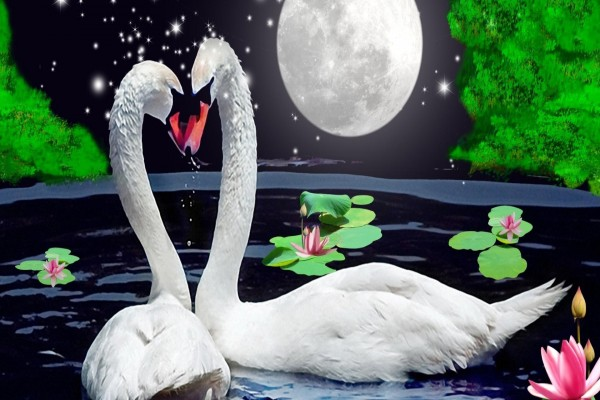 Amor bajo las estrellas y la luna