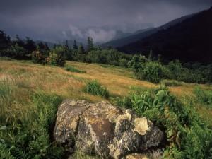 Postal: Roca en un campo verde