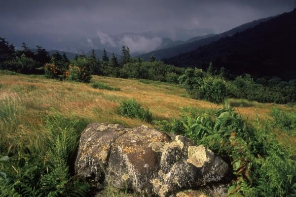 Roca en un campo verde