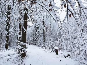 Ramas soportando el peso de la nieve