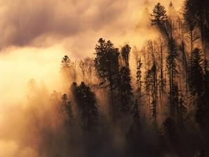 Espesa niebla cubriendo los árboles
