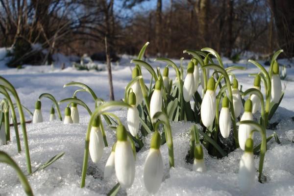 Hermosas flores brotando en invierno