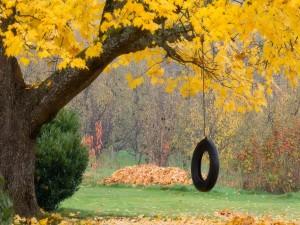 Neumático colgado de un árbol otoñal