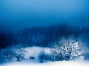 Niebla en un paisaje nevado