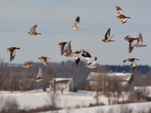 Postal: Aves volando en invierno