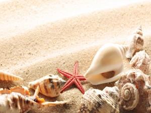 Postal: Pequeña estrella de mar junto a varias caracolas