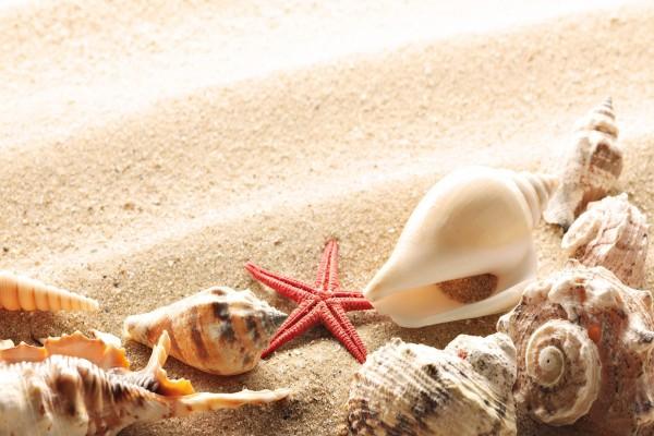 Pequeña estrella de mar junto a varias caracolas
