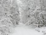 Camino blanco entre árboles