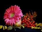 Una gerbera rosa sobre una manzana