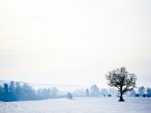 Postal: Árbol sobre un campo helado
