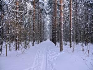 Postal: Huellas en un camino cubierto de nieve