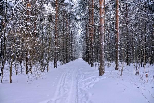 Huellas en un camino cubierto de nieve