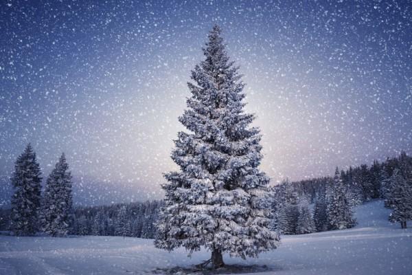 Nieva sobre los grandes pinos