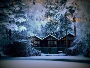 Postal: Cabañas en un bosque nevado