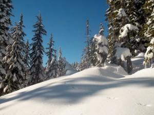 Postal: Gran cantidad de nieve acumulada bajo los árboles