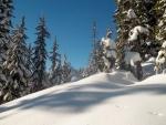 Gran cantidad de nieve acumulada bajo los árboles