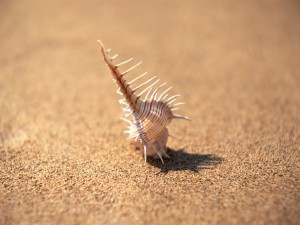 Caracola sobre la arena