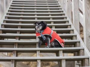 Perrito en una escalera de madera