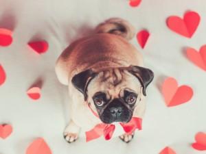 Postal: Bello perrito entre corazones