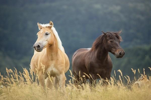 Dos hermosos caballos viviendo en libertad