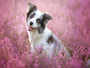 Un tierno perrito sentado entre flores