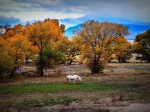Caballo comiendo hierba a la llegada del otoño