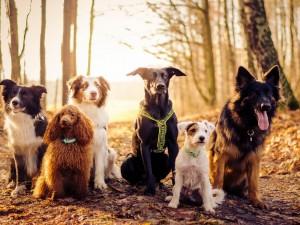 Amigos perros posando para la foto