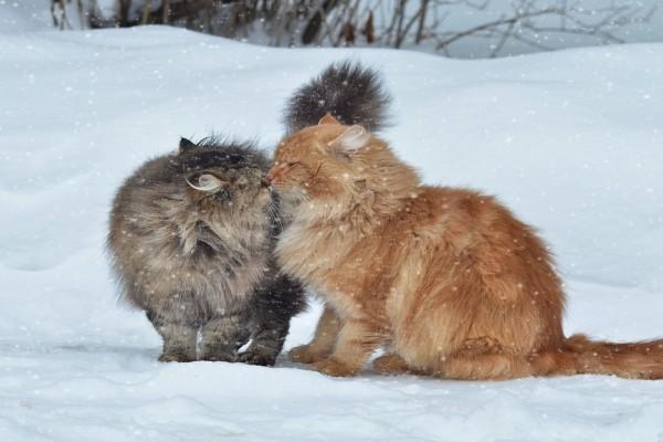 Cariños gatos en la nieve