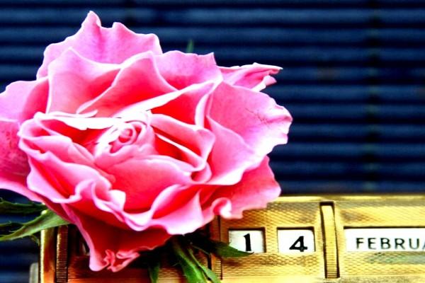 """Una rosa para el 14 de febrero """"Día de San Valentín"""""""