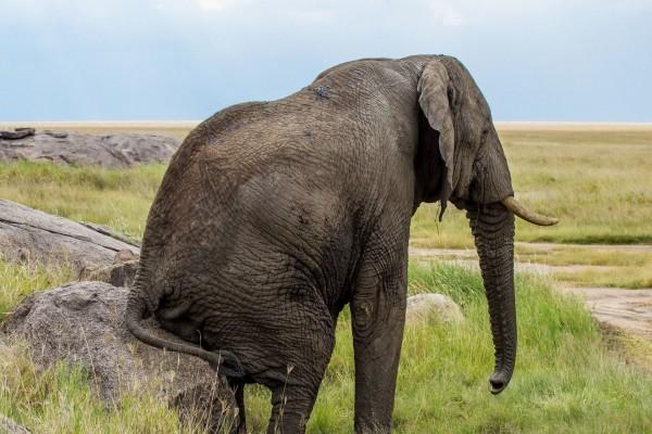Elefante sentado en una roca