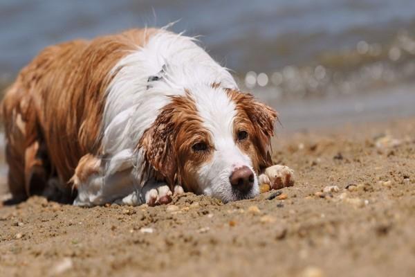 Perro mojado descansando dobre la arena de una playa