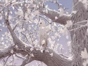 Búho nival posado en un árbol
