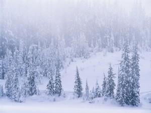 Postal: Niebla sobre un paisaje nevado