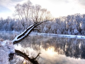 Postal: Árbol cubierto de nieve reflejado en un río