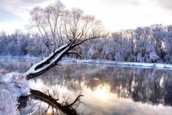 Árbol cubierto de nieve reflejado en un río