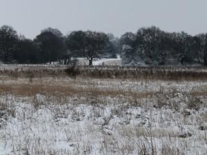 Campo al comienzo del invierno