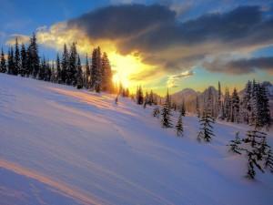 Colinas nevadas en la puesta de sol