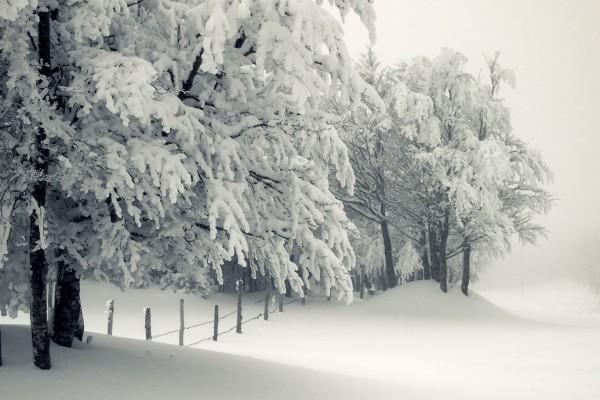 Nieve y niebla en un campo