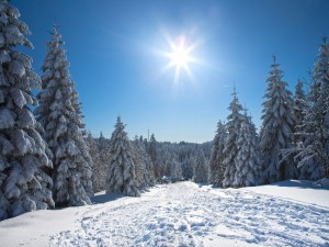 Postal: El sol brillando sobre un camino cubierto de nieve