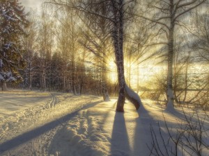 Postal: La luz del sol iluminando un paisaje nevado
