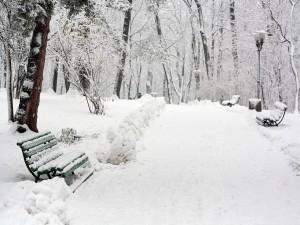 Bancos cubiertos de nieve en un parque