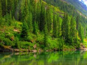 Pinos verdes reflejados en el agua
