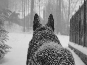 Perro negro cubierto de blanca nieve