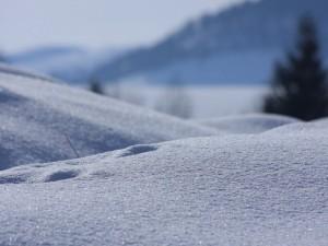 Postal: A ras de nieve