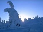 Sol iluminando unos árboles cubiertos de nieve