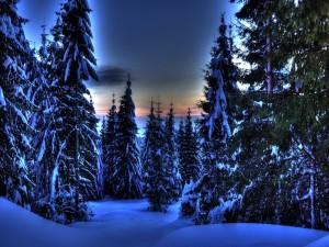 Paisaje invernal con tonos azulados