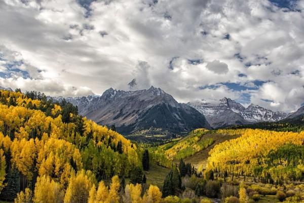 Follaje amarillo en otoño