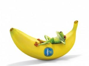 Rana recostada sobre una banana