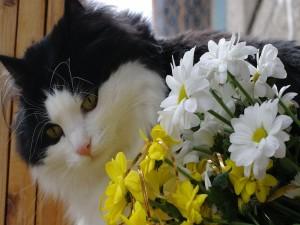 Gato impresionado por unas flores