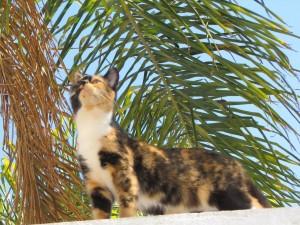 Gato olisqueando el ambiente